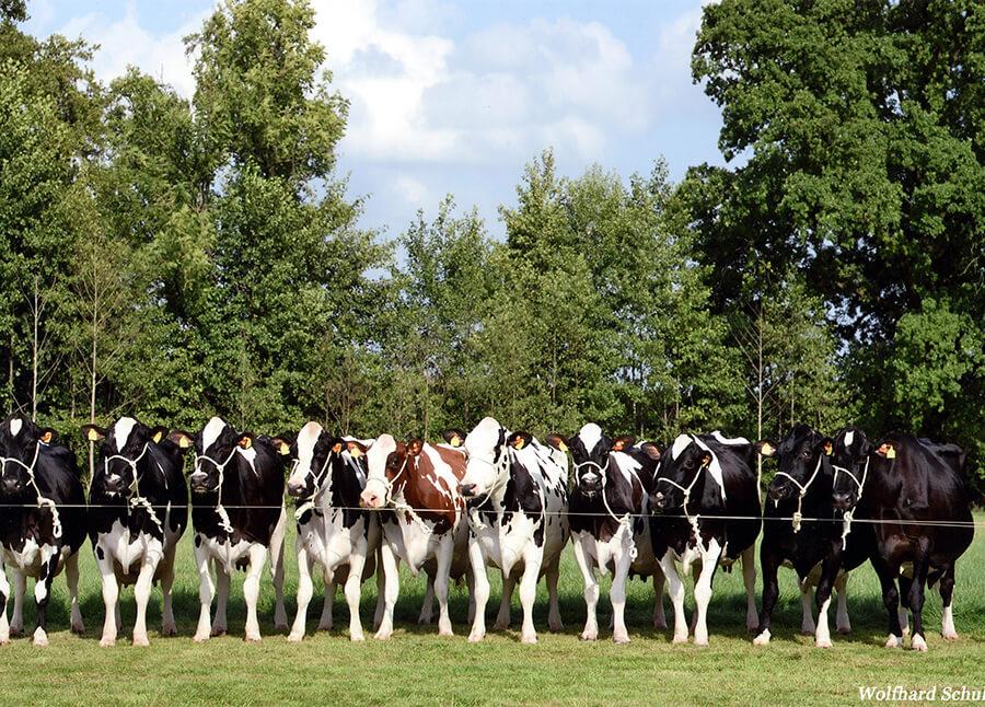 Meyer-Kettenkamp-10-100000-Liter-Kühe